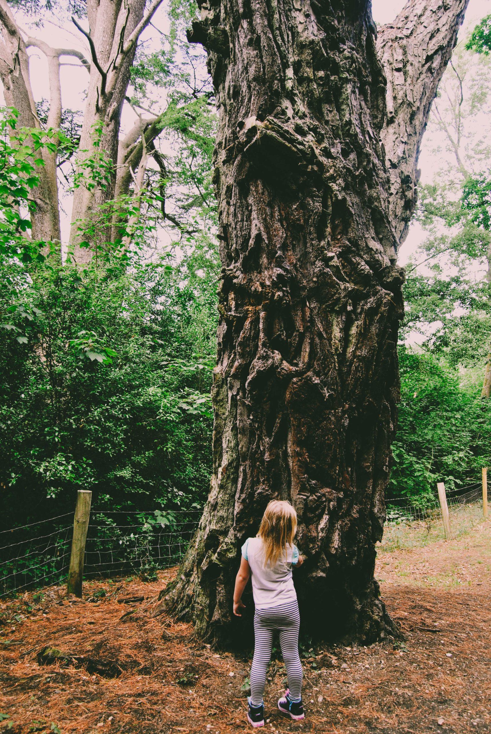 ジブリパークのどんどこ森エリアはトトロの世界が満喫できる!サツキとメイの家は再現性が凄い!